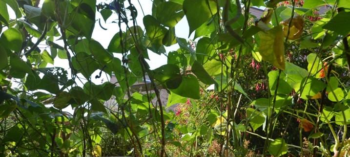 Gartenplanung: Es ist mehr möglich, als man denkt